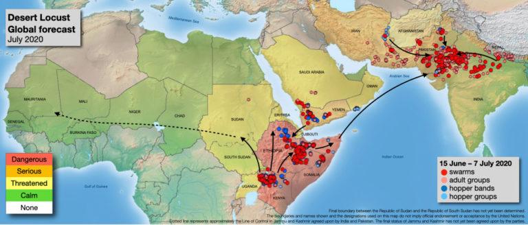 【国際】FAO、サバクトビバッタ蝗害がインドで増大。ラオスで発生の蝗害はまだ小規模