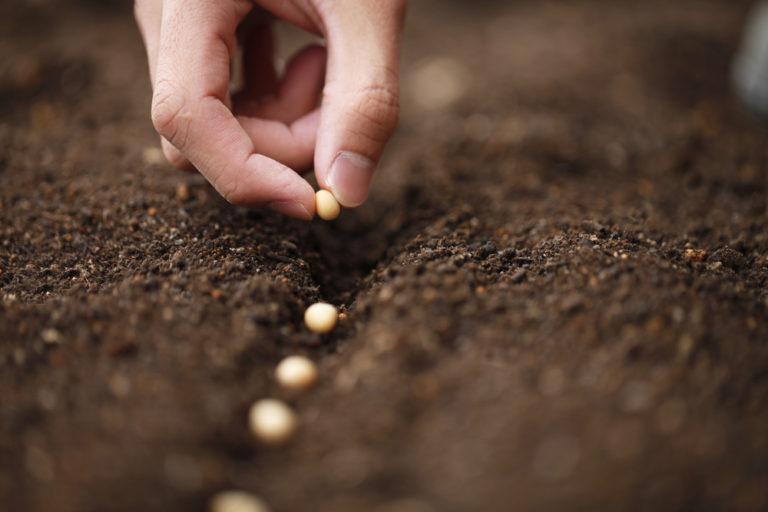 【国際】FAO、食料・農業分野のSDGs達成はすでに困難な状況。新型コロナでさらに状況悪化