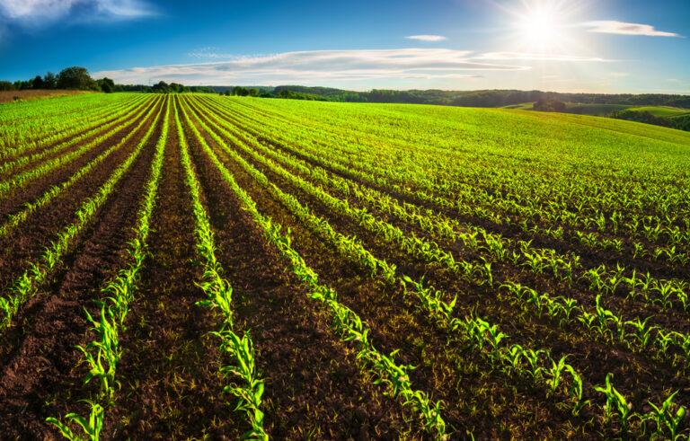 【日本】農水省、食料・農林水産業のTCFDガイダンス発行。脱炭素化技術の紹介資料も公表